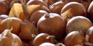 Agrosaveti - Povrtarska proizvodnja Gospodjinci 05