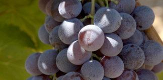 Agrosaveti - Proizvodnja vocnih rakija - Kada rakija sama nalazi put do proizvodjaca 012