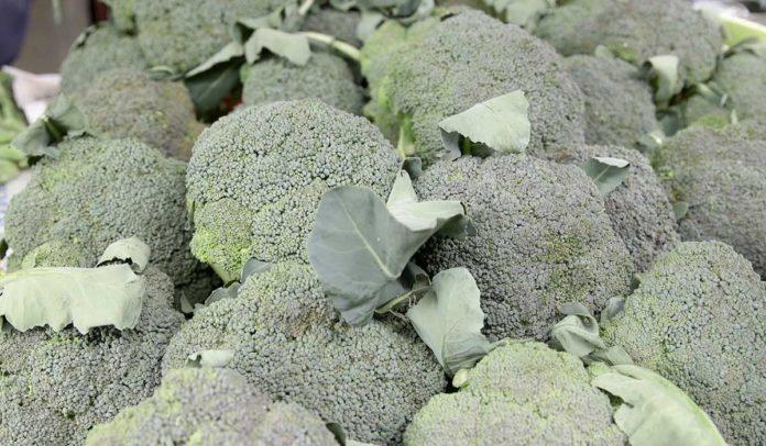 Agrosaveti - Savremena proivodnja povrca 01
