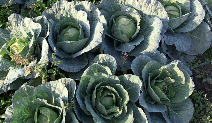 Agrosaveti - Savremena proivodnja povrca 04