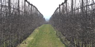 Agrosaveti - Adama - Prolecno prskanje jabuka mart 01