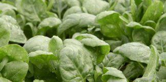 Agrosaveti - Plastenička proizvodnja povrća u selu Voganj - 01