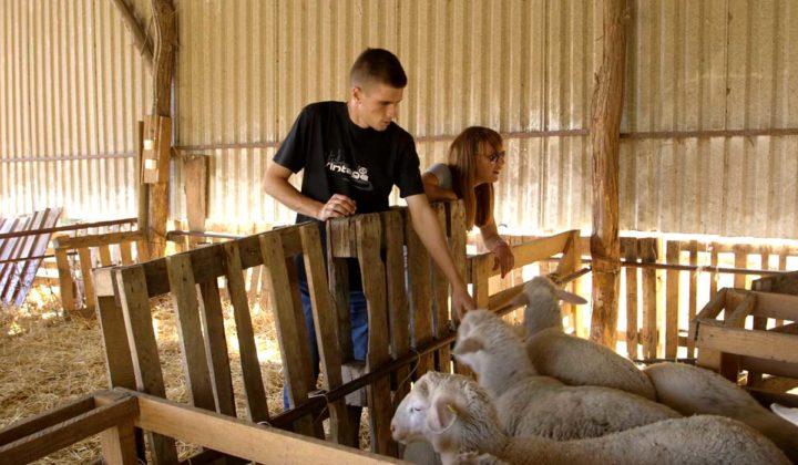 Agrosaveti - uzgoj ovaca u Ravnom Selu - 05