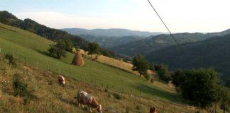 Agrosaveti - Pejzazi Bajina Basta