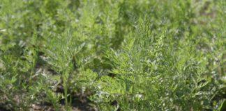 Agrosaveti - Povrce 12