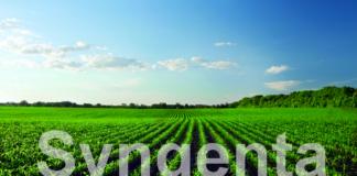 Agrosaveti - Syngenta Corn Green Zasticeno