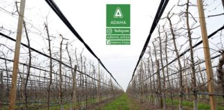 Agrosaveti - Adama - Jabuka - Cadjava Krastavost 01