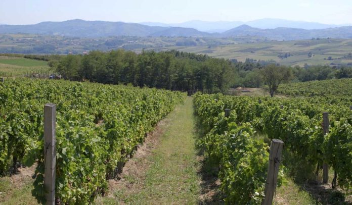 Agrosaveti - Fruška gora - Toskana 01
