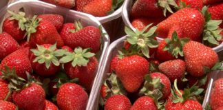 Agrosaveti - Jagode, pesticidi 01