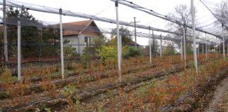 Agrosaveti - PSSS Mladenovac 02