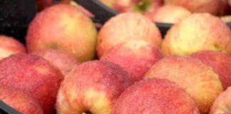 Agrosaveti - Plasman voća u Rusiju 05