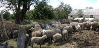 Agrosaveti - Poljoprivreda u šabačkoj opštini 05