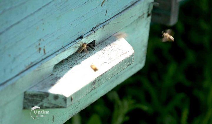 Agrosaveti - Sajam pčelara Vojvodine 02