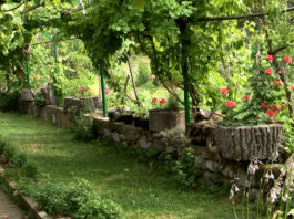 Agrosaveti - Seoski turizam 02