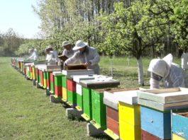 Agrosaveti - Subvencije pčelarstvo 01