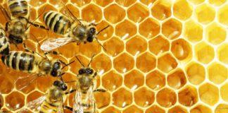 Agrosaveti - Zaštita pčela u EU 01