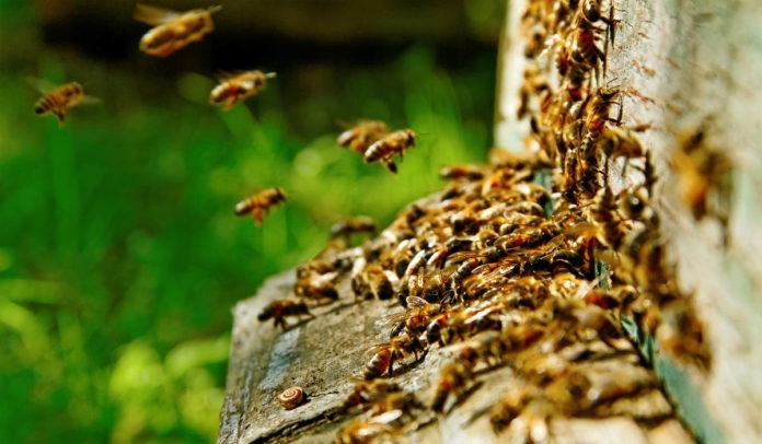 Agrosaveti - Zaštita pcela, prskanje 01