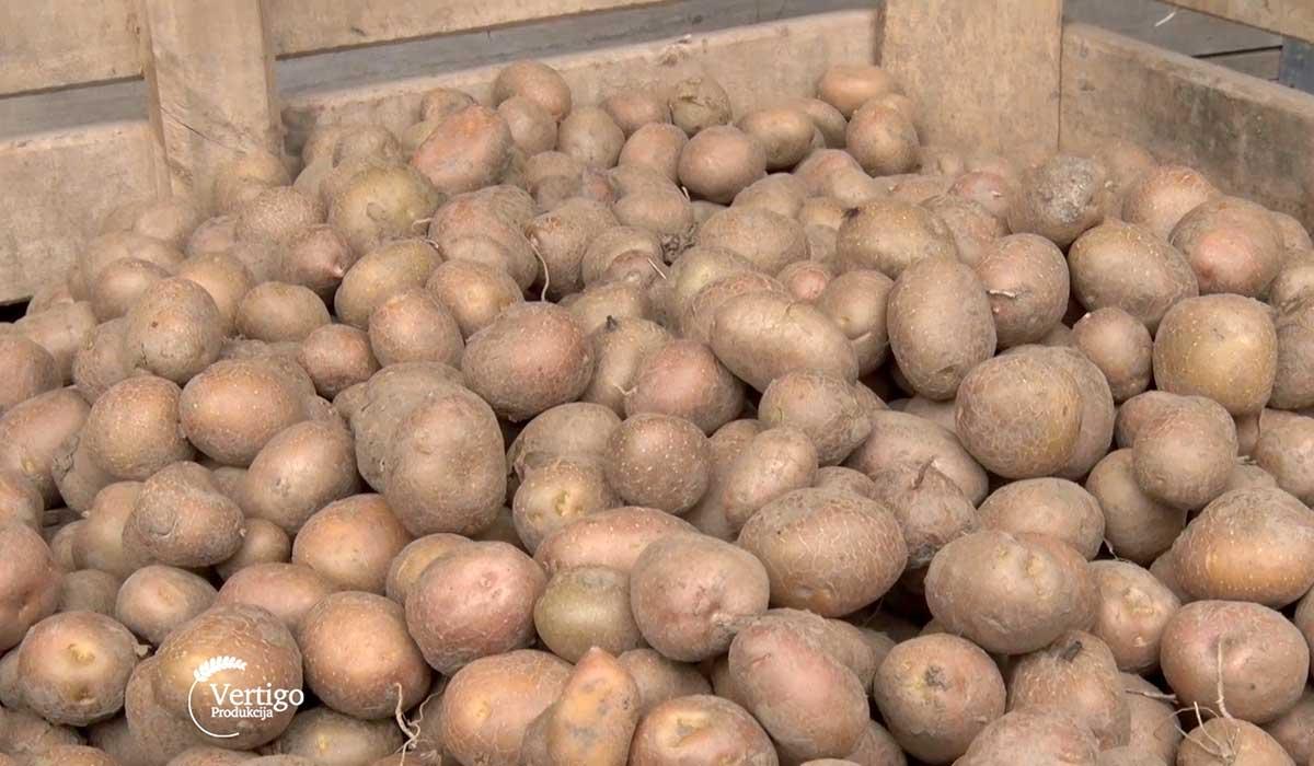 Agrosaveti - Krompir Kikinda 05