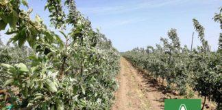 Agrosaveti-Adama-Jabuka-Jabukin-Smotavac