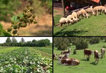 Agrosaveti - Podsticaji za organsku proizvodnju 01