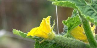 Agrosaveti - Proizvodnja povrca 01