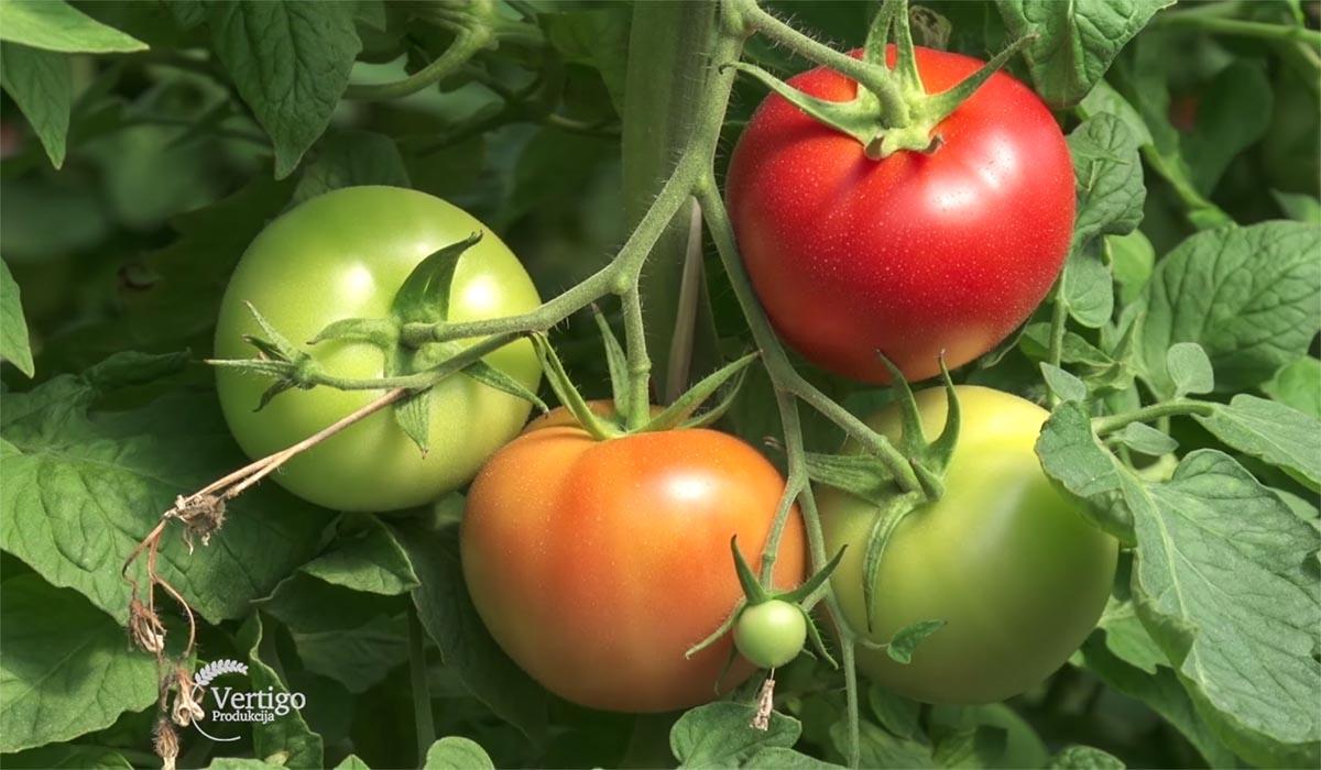 Agrosaveti - Proizvodnja povrca 05