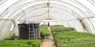 Agrosaveti - Proizvodnja rasada Vrba 07