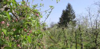 Agrosaveti - Vocarsko vinogradarska proizvodnja Suvodol 05