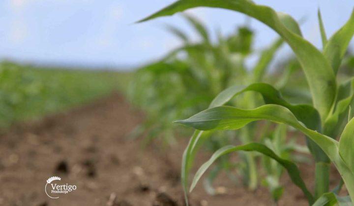 Agrosaveti - Ratarska proizvodnja Sid Djiercan 01