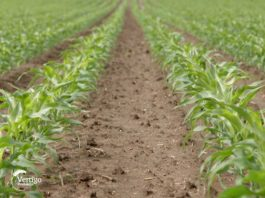 Agrosaveti - Ratarska proizvodnja Sid Djiercan 02