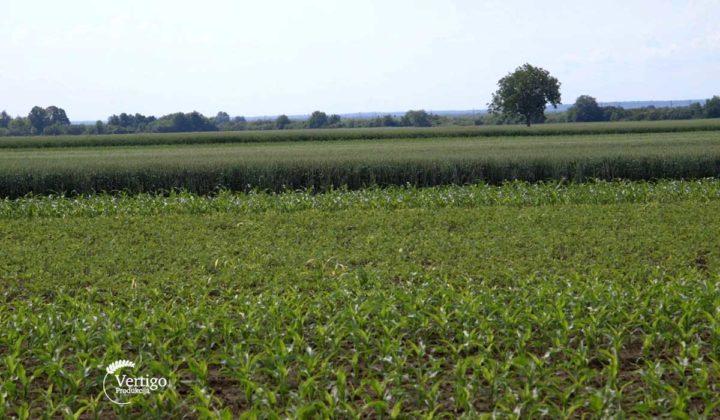 Agrosaveti - Ratarska proizvodnja Sid Djiercan 06