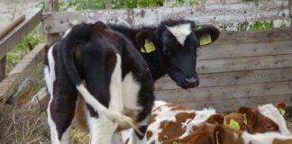 Agrosaveti - Ratarsko - govedarska proizvodnja BM 01