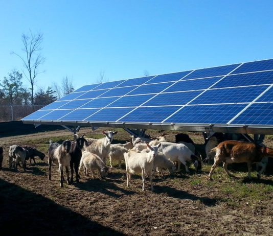 Agrosaveti - Solarni paneli na farmama 01