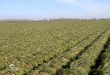 Agrosaveti - Ucesce drzave u osiguranju poljoprivrede 01