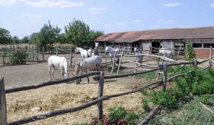 Agrosaveti - Uzgoj konja lipicanera Svilajnac 01