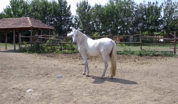 Agrosaveti - Uzgoj konja lipicanera Svilajnac 06