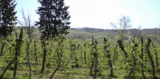 Agrosaveti - Vocarska proizvodnja Smederevo 09
