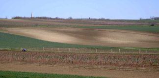 Agrosaveti - Vocarstvo i ratarstvo Novi Slankamen 06