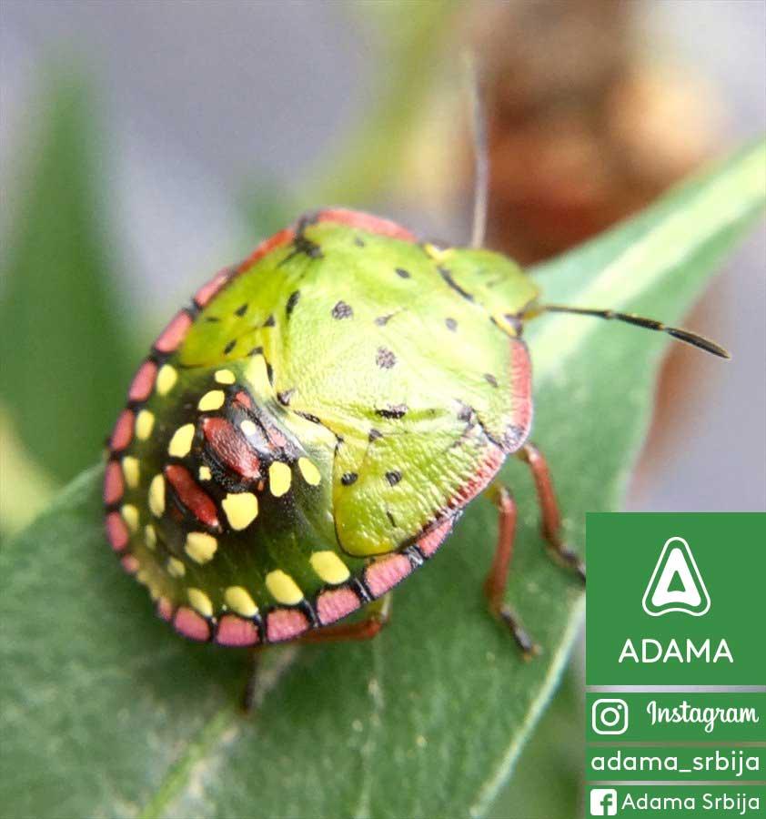 Agrosaveti---Adama---Breskva---Nezera-Vinudula---Zelena-Stenica-01