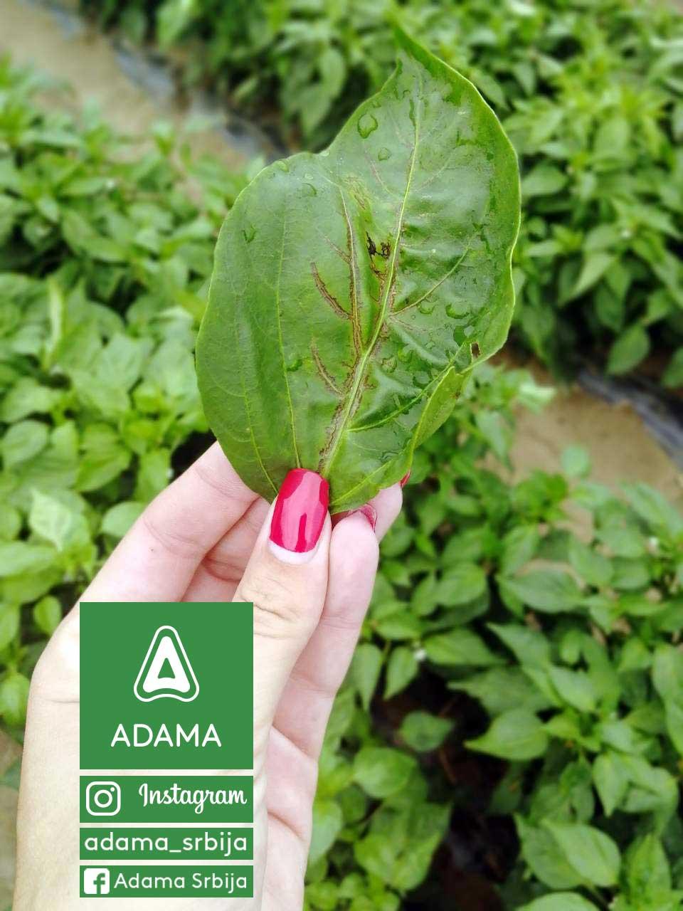 Agrosaveti---Adama---Povce---Paprika---Virusi-02