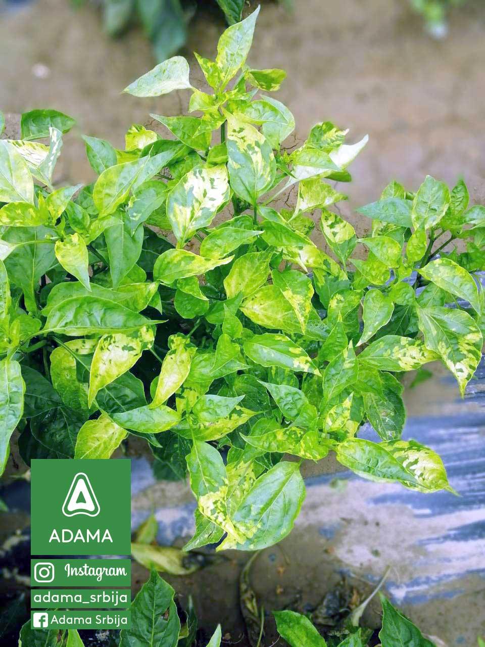 Agrosaveti---Adama---Povce---Paprika---Virusi