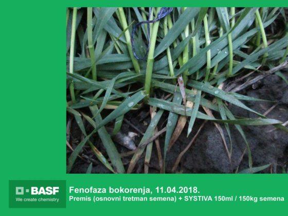 Agrosaveti---BASF---Systiva---Psenica-02