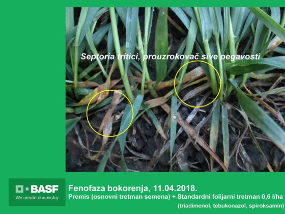 Agrosaveti---BASF---Systiva---Psenica-03