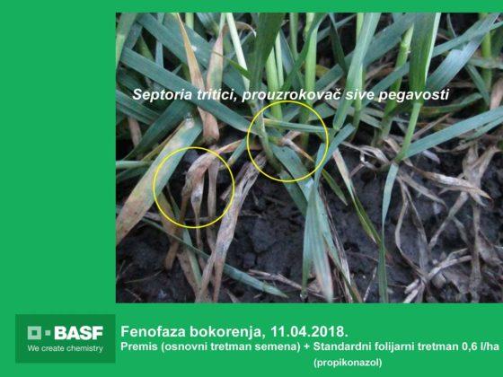 Agrosaveti---BASF---Systiva---Psenica-04