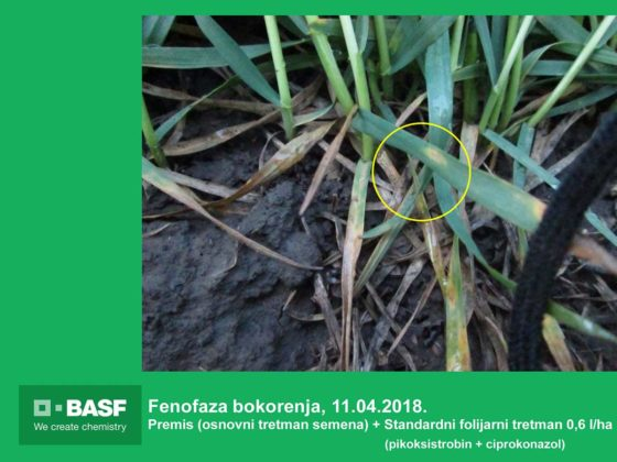Agrosaveti---BASF---Systiva---Psenica-05