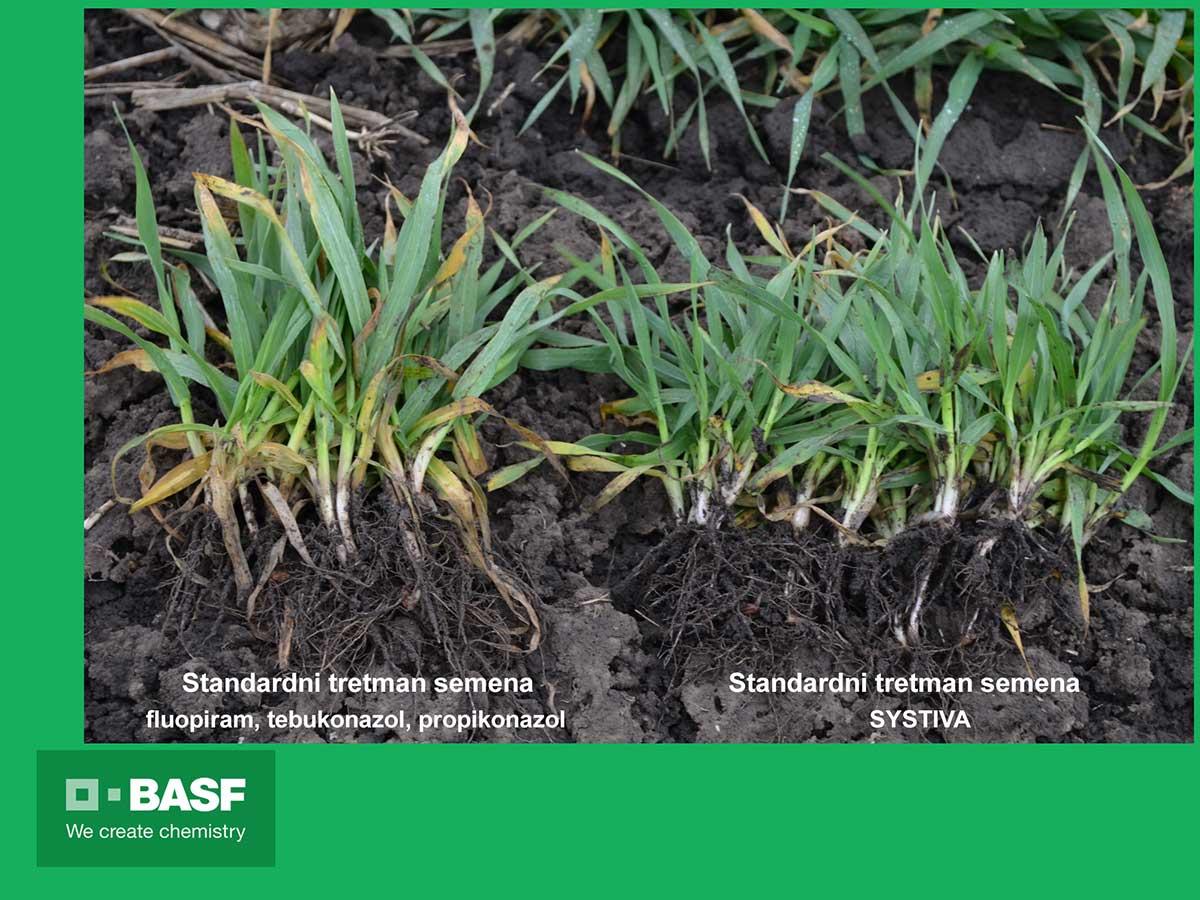 Agrosaveti---BASF---Systiva---jecam-01