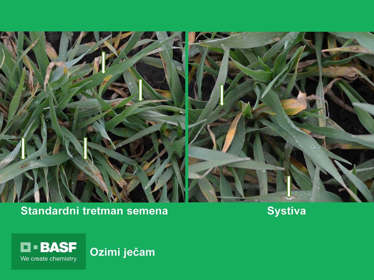 Agrosaveti---BASF---Systiva---jecam-02