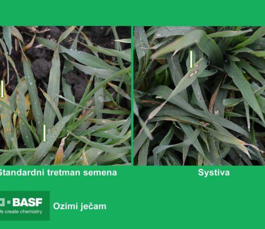 Agrosaveti---BASF---Systiva---jecam-03