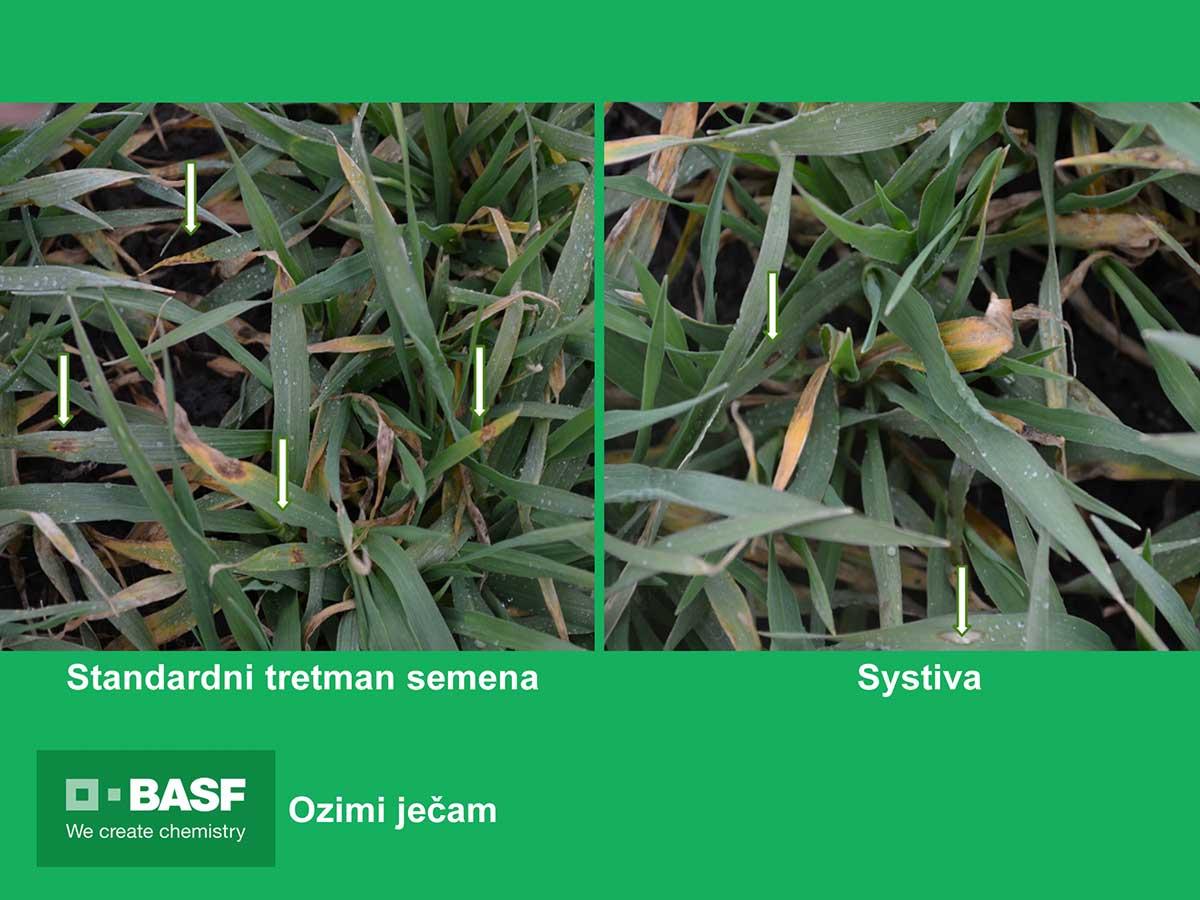Agrosaveti---BASF---Systiva---jecam