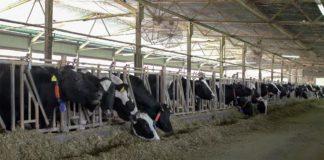 Agrosaveti - Embriotransfer u govedarstvu 08